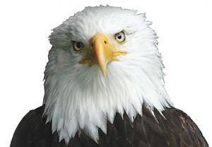 EagleFace2